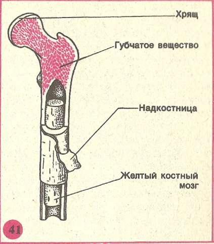 Первая медецинская помощь при растяжении связок, и вывиха суставов лечение острого бурсита локтевого сустава народными средствами