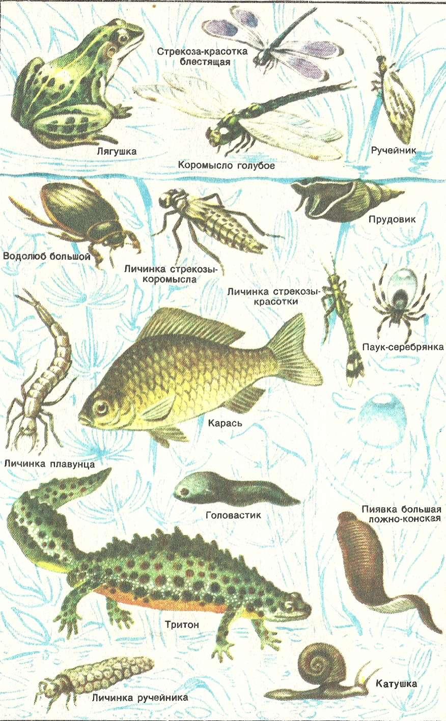 Картинки млекопитающие