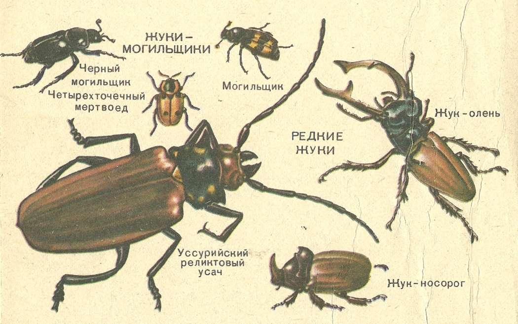 список жуков с картинками постоянных набегов