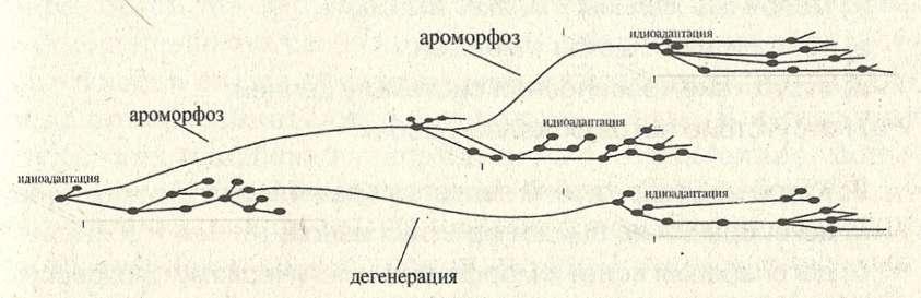 эволюционного процесса