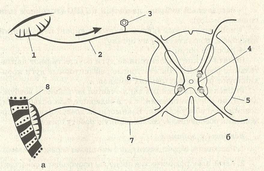 Нервная система.