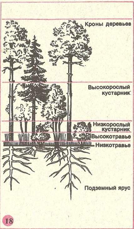 Ритмика развития растительного