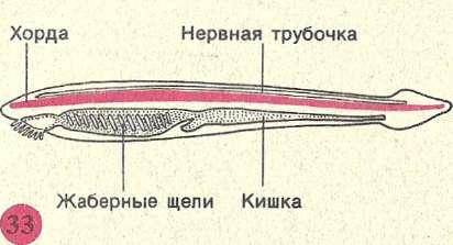 Жаберные щели у скатов расположены в нижней части тела, поэтому