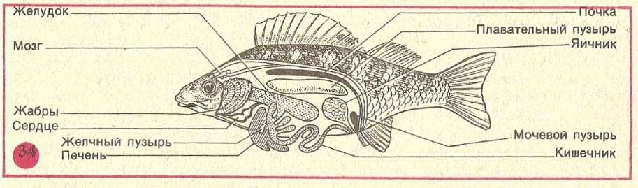 Хозяйственное значение рыб и