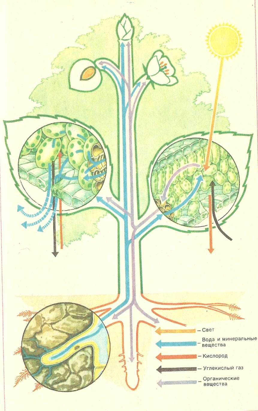История развития органического мира
