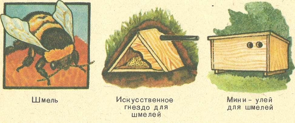 Как сделать гнездо для шмелей