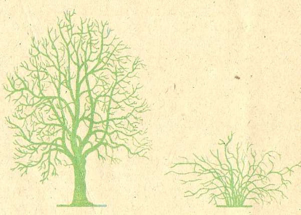 Дерево и кустарник.