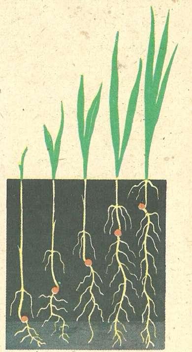 и глубина заделки семян.