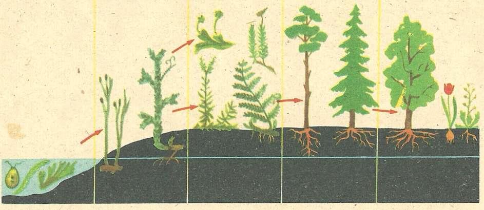 Схема эволюции растений от